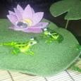 蓮と2匹のガラスガエル
