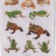 リアルステッカー_the_frog_2